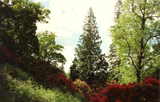 Ardkinglas Gardens, Cairndow