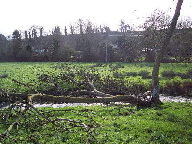 Fallen tree over River Ebble in Broad Chalke