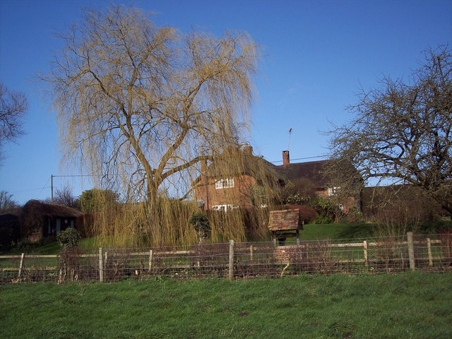 Thatched cottage and willow tree in Broad Chalke