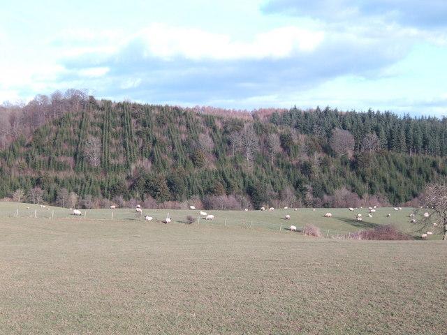 Upper Tal-y-coed Wood
