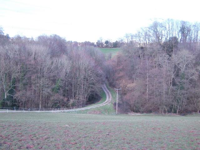 Track through Llyfos Wood