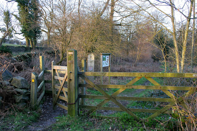 Burrow Wood