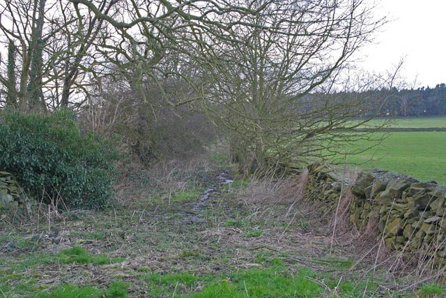 Overgrown track to Green Hill Lodge Farm