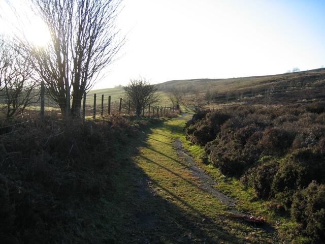 Footpath below Llyn Cyfynwy