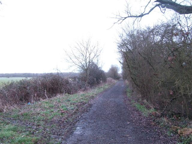 Great Rose Lane