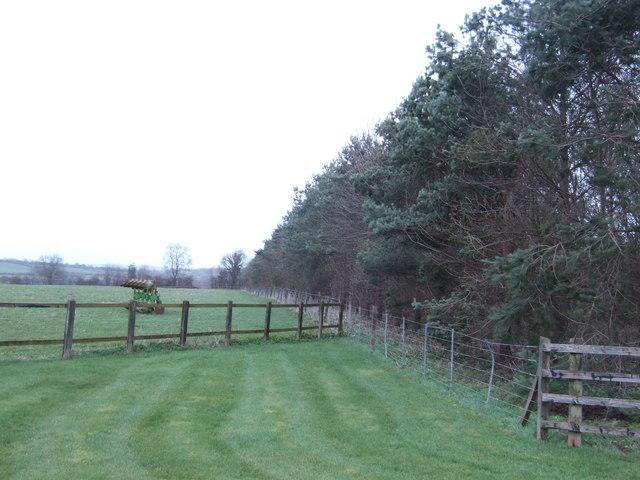 Windbreak along the B4019 at Stubb's Hill