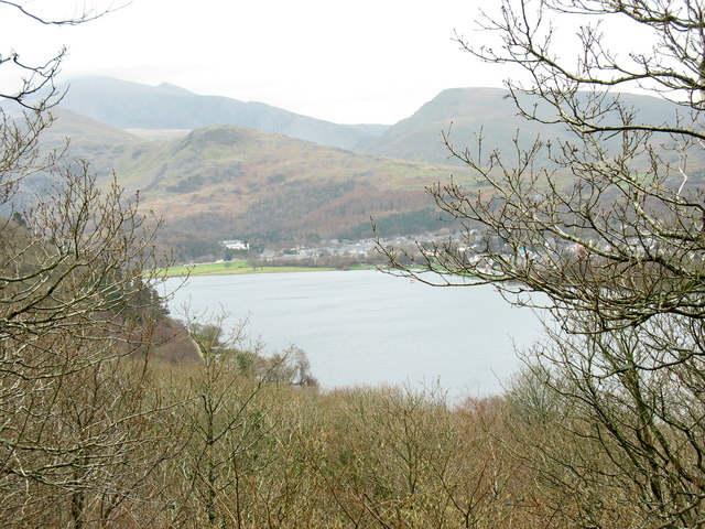 Natural woodland above Llyn Padarn