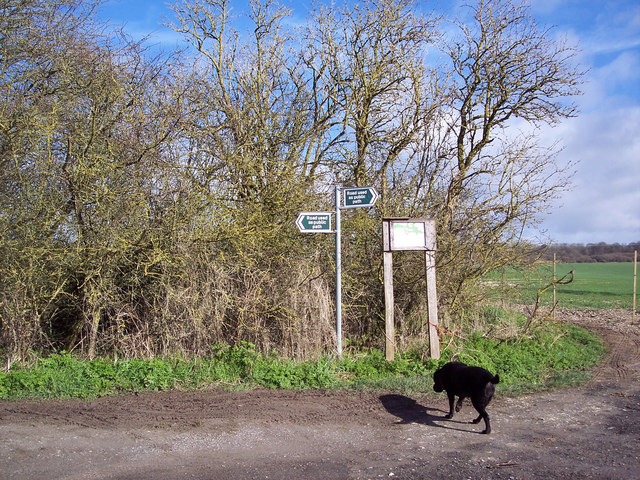 Ox Drove and bridleway junction near Barford St Martin