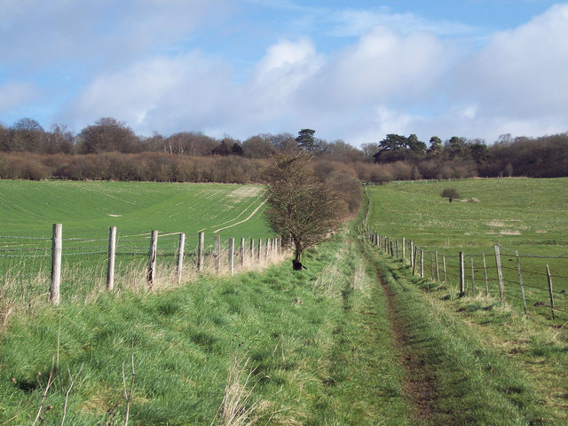 Bridleway towards Grovely Woods