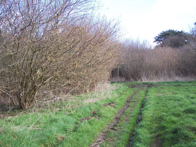 Bridleway entering Grovely Woods