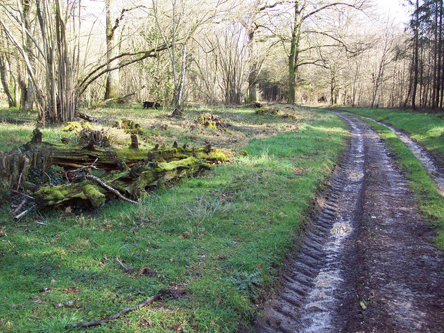 Bridleway in Grovely Woods