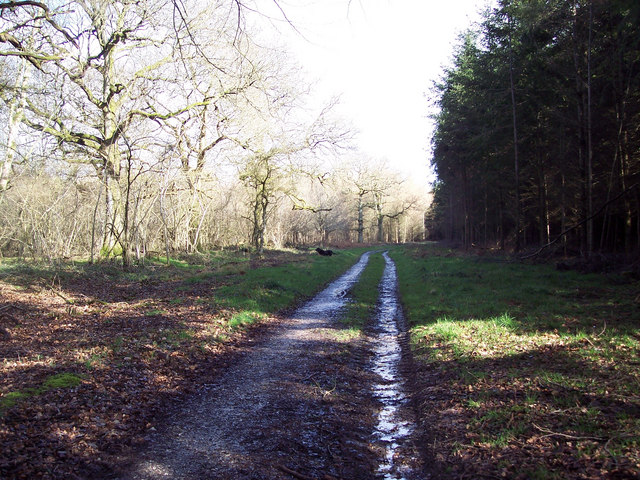 The bridleway towards First Broad Drive, Grovely Woods
