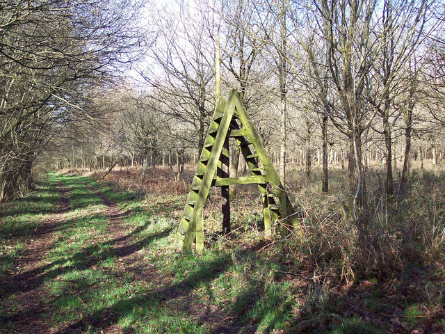 Ladder stile over thin air in Grovely Woods