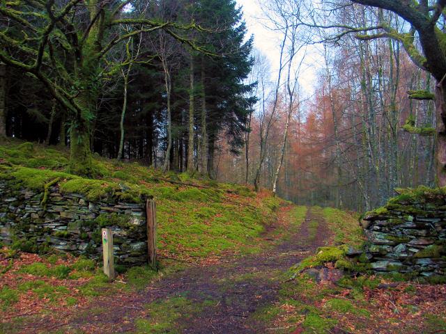 Ceunant Llennyrch Woodland Trail