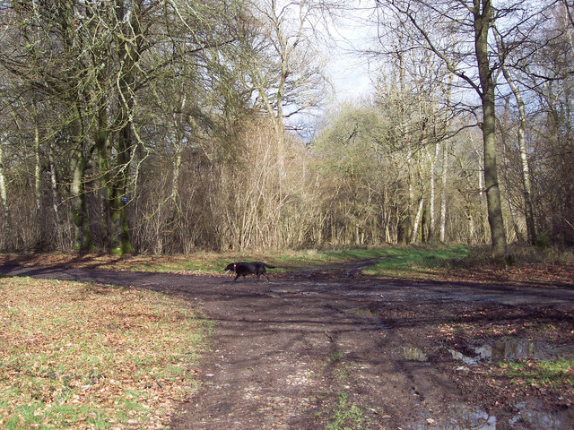 Bridleway from Barford St Martin joining First Broad Drive, Grovely Woods