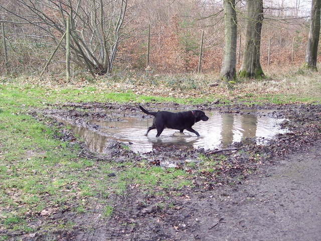 Guinness doing what Guinness does best - getting muddy!
