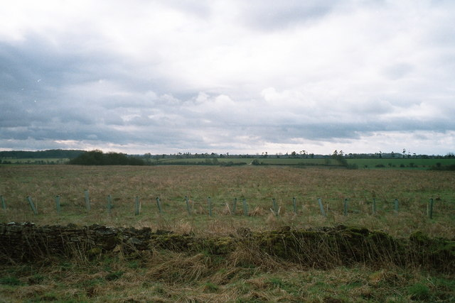 Field boundary south of minor road