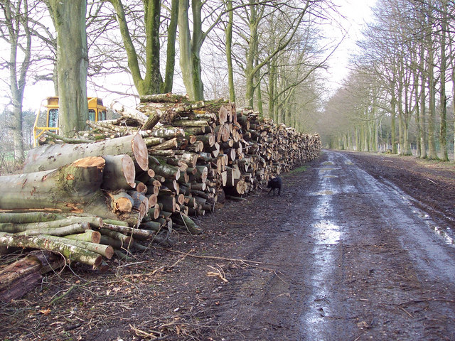Stacked timber alongside First Broad Drive, Grovely Wood