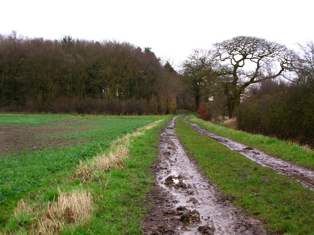 The Track to Shallowford Gorse