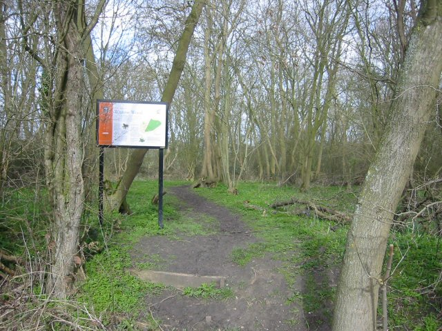 Wistow Wood Nature Reserve