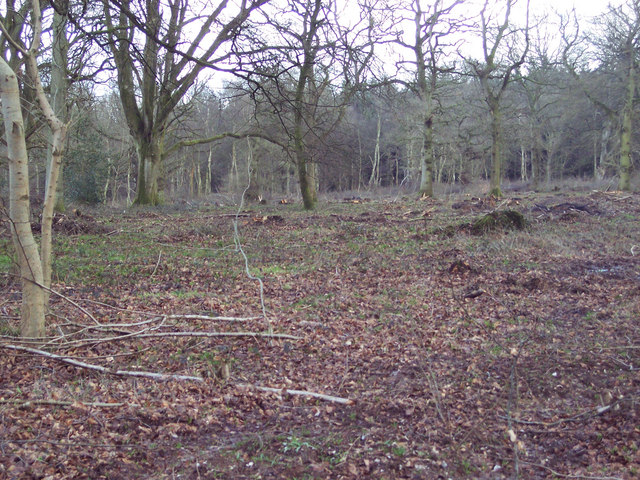 Cleared woodland in Grovely Wood