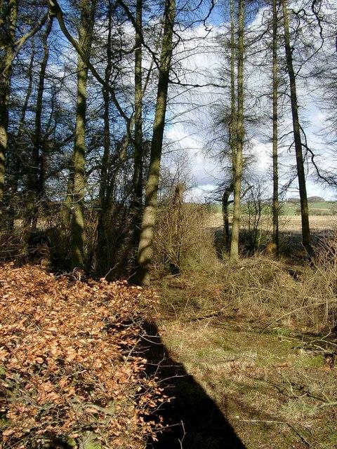 Rough woodland near Parkhill