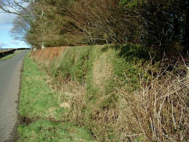 Unusual hedge