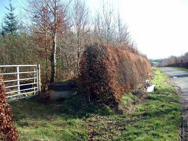 Hedge and woodland near Barrhill