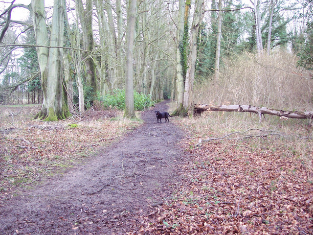 Footpath in Grovely Wood