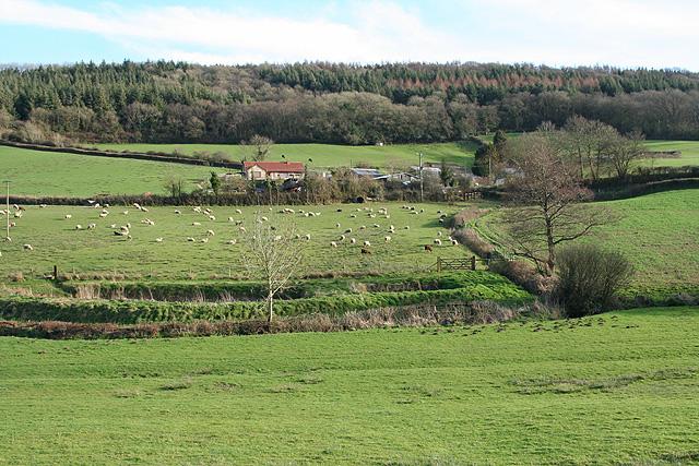 Colyton: towards Jobbleshayes Farm