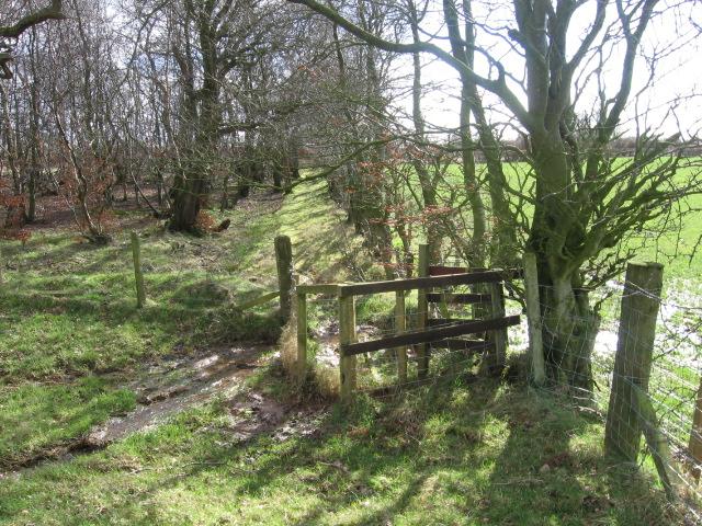 Path SCD33 near Catrine