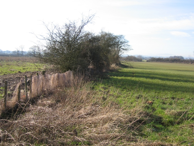 Hedge and Footpath near the River Dee