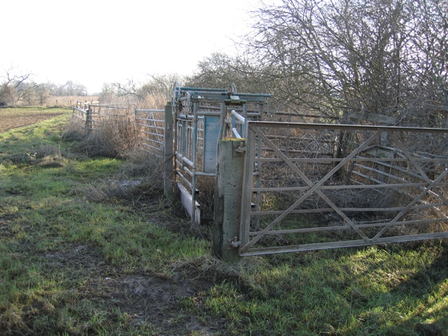 Cattle Management Equipment on the River Dee Flood Meadows