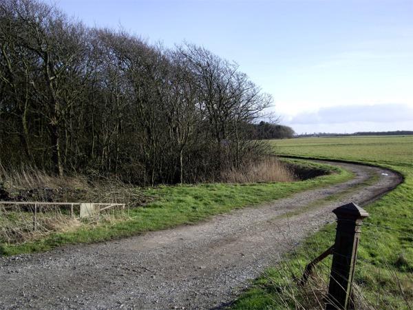 Lane skirting Flea Moss Wood, near Hightown