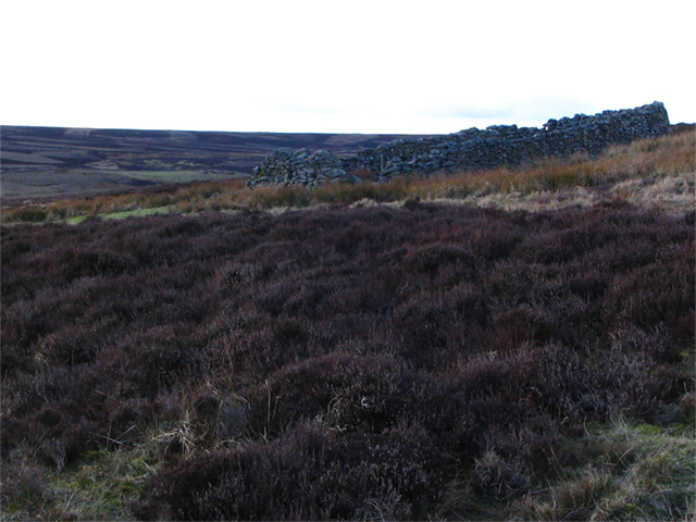Sheep Fank on hill