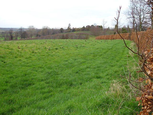 Meadow by Kemsdale Lane