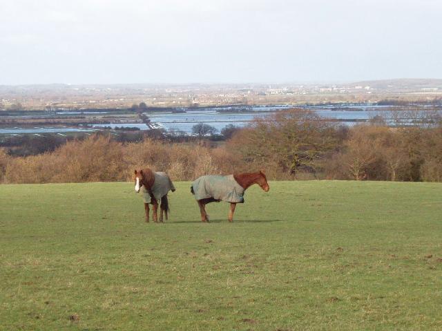Horses in field, flooded Otmoor beyond