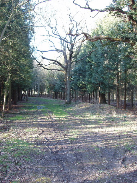 Blackwater Wood