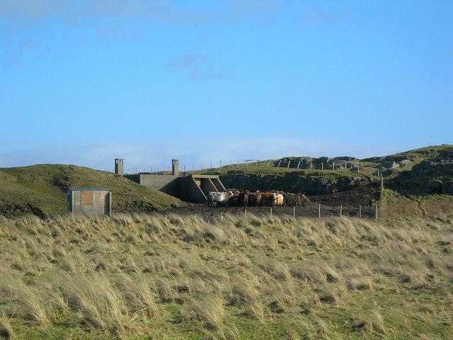 Cattle Feeding Area