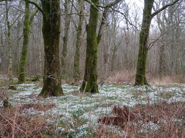 Bridgend Woods in Winter