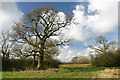 SP3106 : Trees and fields near Lew Barrow by Martin Loader
