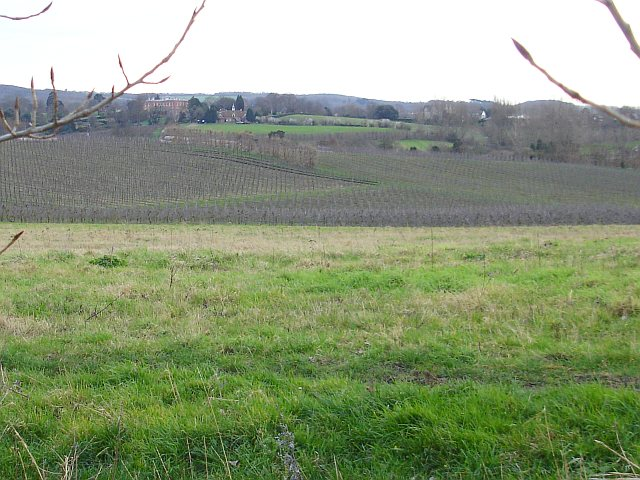 Orchards south west of Hernhill