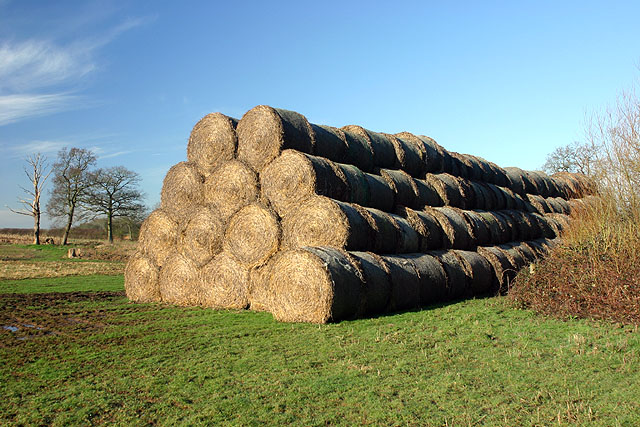 Straw bales near Moulden's Wood