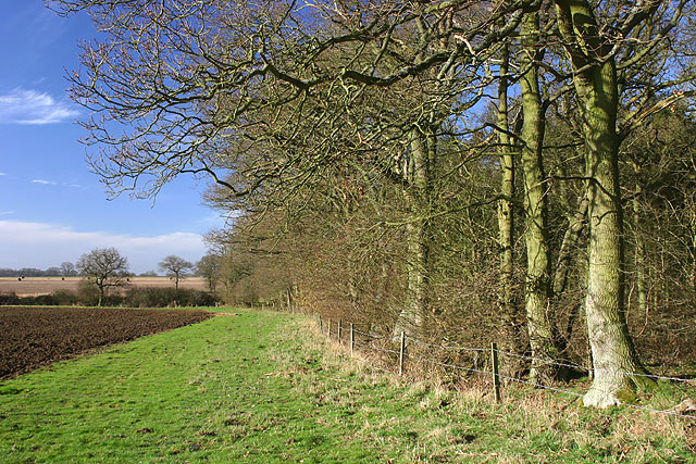 Moulden's Wood