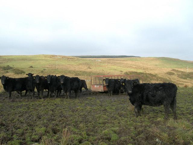 Islay Beef