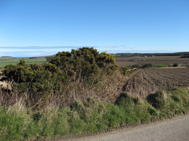 Hedgerow beside small burn near Portsoy