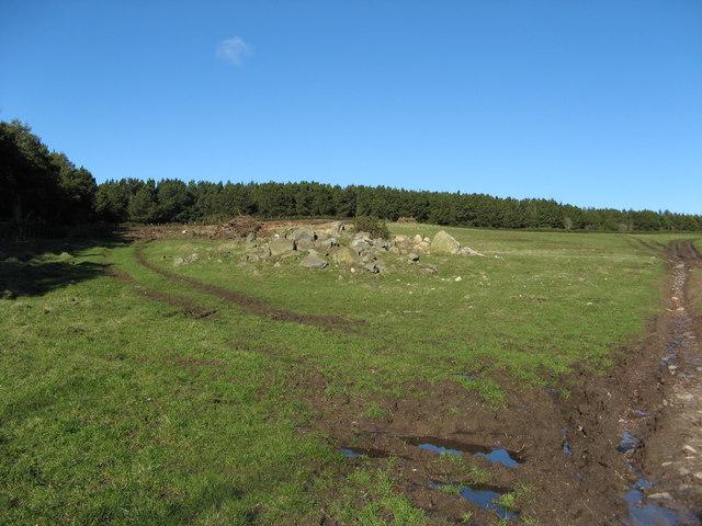 Fordycehill Plantation