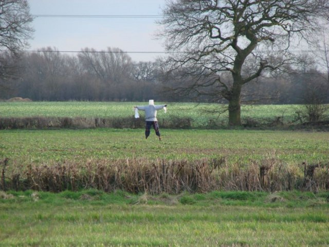 Field of crops with scarecrow off Black Syke Lane
