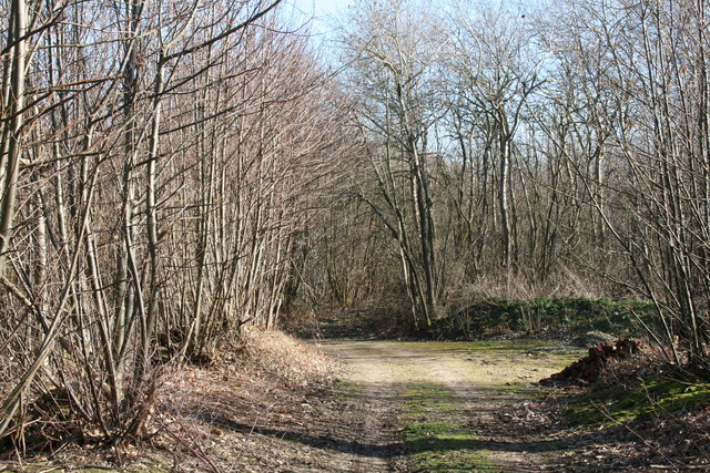 Track into Burgess Rough, near Tonbridge, Kent