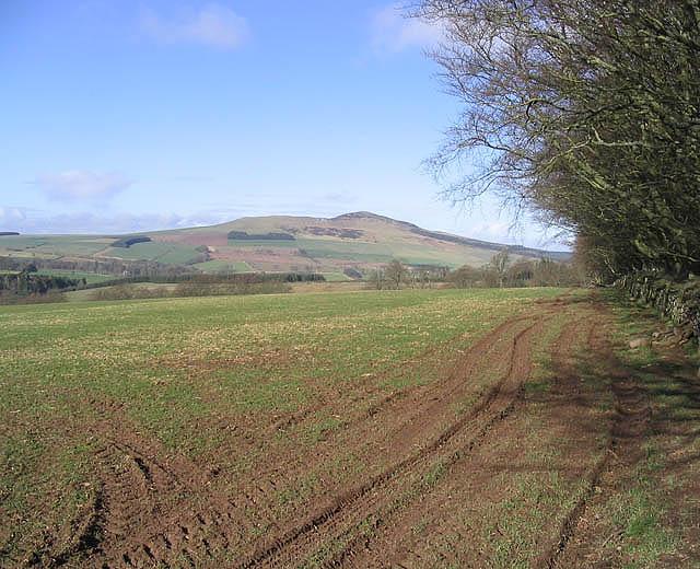 A field near Ruletownhead.